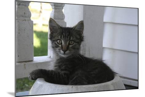 Animals Cats Kitten in Bowl-Jeff Rasche-Mounted Photographic Print