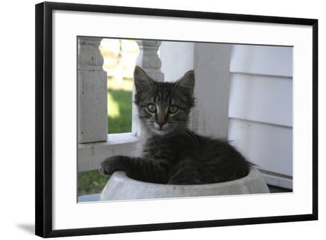 Animals Cats Kitten in Bowl-Jeff Rasche-Framed Art Print