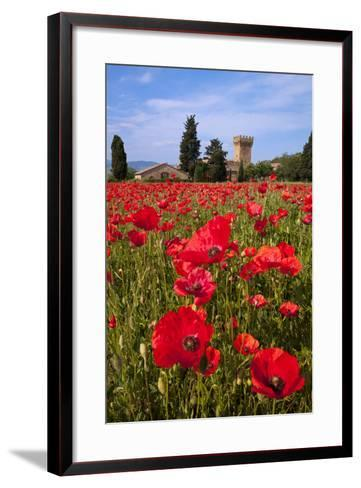 Poppies Close and Personal-Michael Blanchette-Framed Art Print
