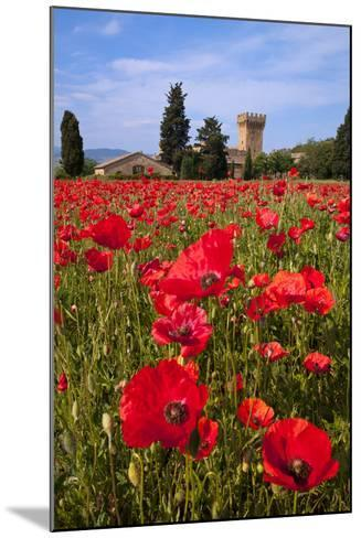 Poppies Close and Personal-Michael Blanchette-Mounted Photographic Print