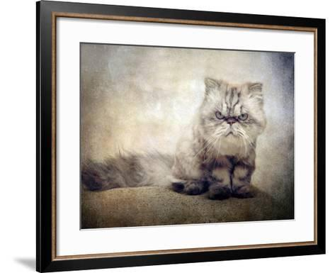 Cranky Cat-Jessica Jenney-Framed Art Print