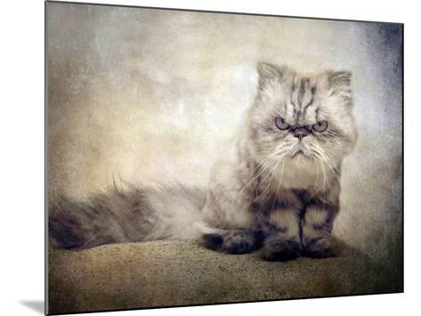 Cranky Cat-Jessica Jenney-Mounted Photographic Print