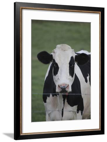 Cows-Jeff Rasche-Framed Art Print