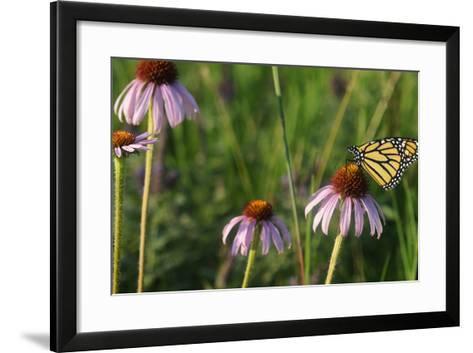 Monarch 5-Gordon Semmens-Framed Art Print
