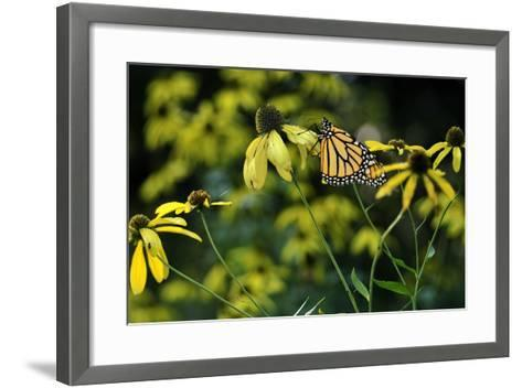 Monarch 2-Gordon Semmens-Framed Art Print