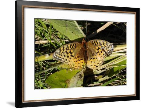 Shades of Nature 55-Gordon Semmens-Framed Art Print
