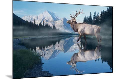 Reflections of Glacier-Gordon Semmens-Mounted Photographic Print