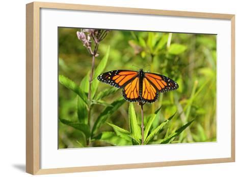 Shades of Nature 56-Gordon Semmens-Framed Art Print