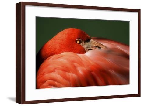 Just a Peek-Harold Silverman-Framed Art Print