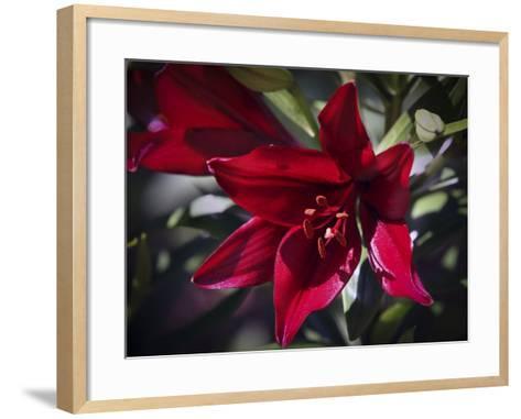 Lily-J.D. Mcfarlan-Framed Art Print