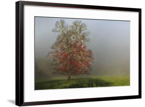 Cades Cove Tree-Galloimages Online-Framed Art Print