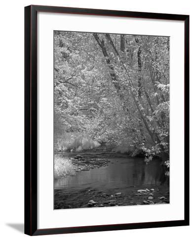 Forrest-J.D. Mcfarlan-Framed Art Print