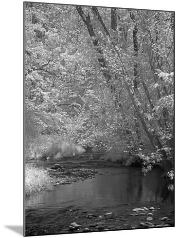 Forrest-J.D. Mcfarlan-Mounted Photographic Print