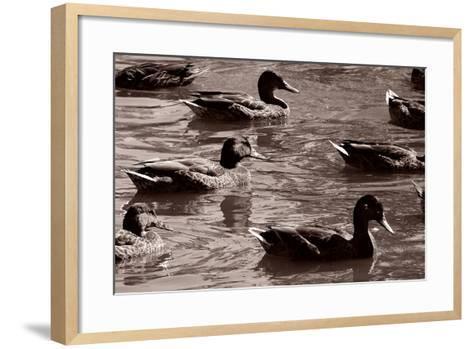Sepia 4-Gordon Semmens-Framed Art Print