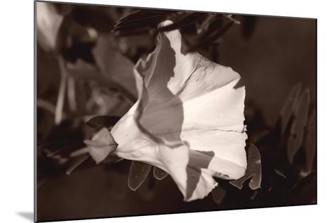Buffalo River 9-Gordon Semmens-Mounted Photographic Print