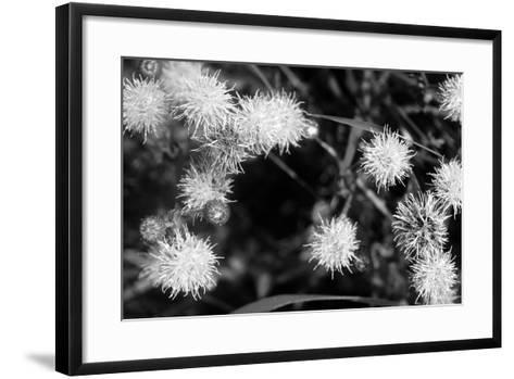 Ash River 10-Gordon Semmens-Framed Art Print