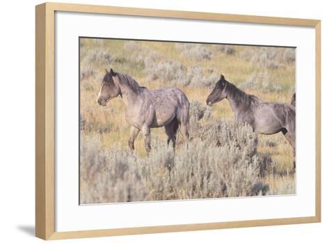 Wild Horses 10-Gordon Semmens-Framed Art Print