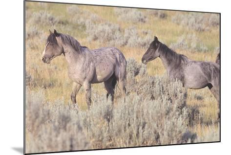 Wild Horses 10-Gordon Semmens-Mounted Photographic Print