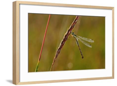Dragonfly-Gordon Semmens-Framed Art Print