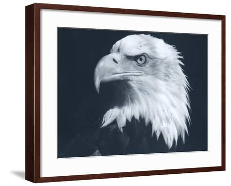 Bald Eagle 3-Gordon Semmens-Framed Art Print
