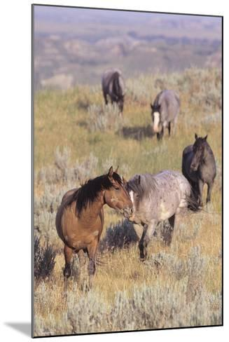 Wild Horses 13-Gordon Semmens-Mounted Photographic Print