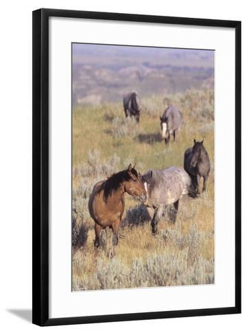 Wild Horses 13-Gordon Semmens-Framed Art Print