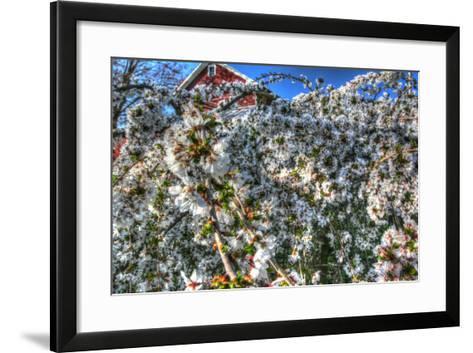 Cherry Blossom Barn-Robert Goldwitz-Framed Art Print
