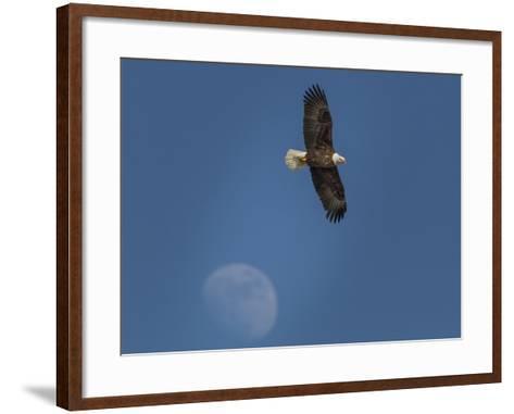 Eagle and Moon-Galloimages Online-Framed Art Print