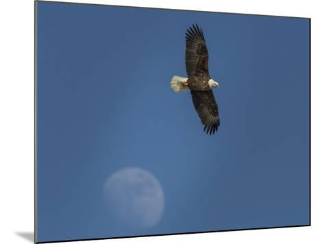 Eagle and Moon-Galloimages Online-Mounted Photographic Print