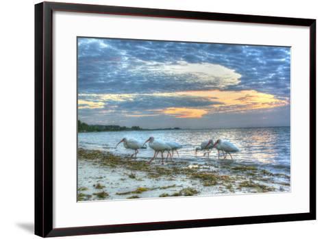 Ibis at Sunrise-Robert Goldwitz-Framed Art Print