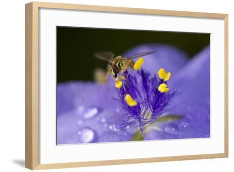 Flower and Bee-Gordon Semmens-Framed Art Print
