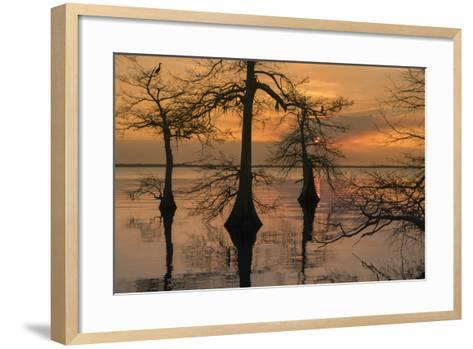 Three Trees on Water-Moises Levy-Framed Art Print