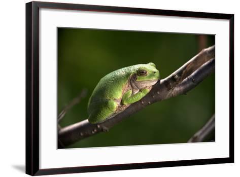Frog-Gordon Semmens-Framed Art Print