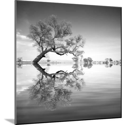 Arbol en Agua 3 BN-Moises Levy-Mounted Photographic Print