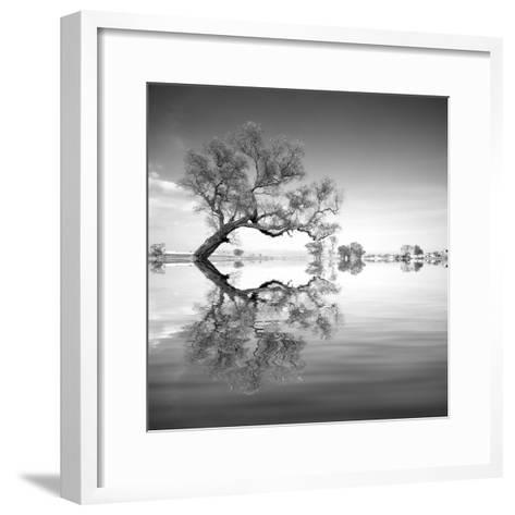 Arbol en Agua 3 BN-Moises Levy-Framed Art Print