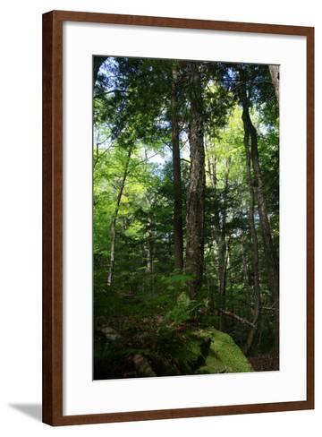 Green Forest Vertical-Robert Goldwitz-Framed Art Print