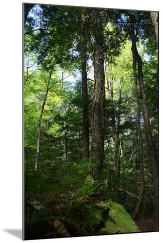 Green Forest Vertical-Robert Goldwitz-Mounted Photographic Print