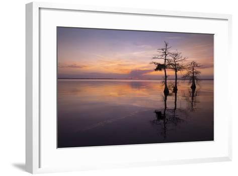 Three Trees on Sunset-Moises Levy-Framed Art Print