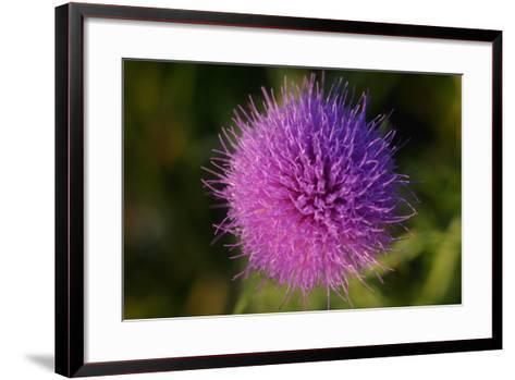 Shades of Nature 16-Gordon Semmens-Framed Art Print