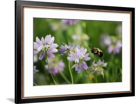 Shades of Nature 10-Gordon Semmens-Framed Art Print