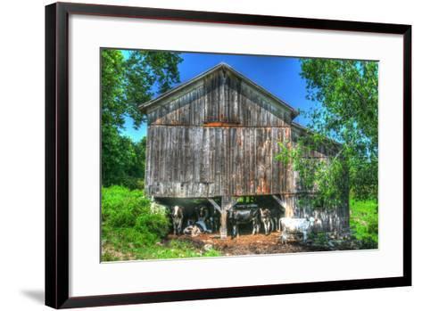Old Barn and Cows-Robert Goldwitz-Framed Art Print