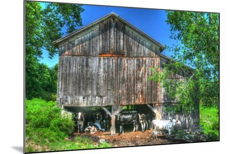 Old Barn and Cows-Robert Goldwitz-Mounted Photographic Print