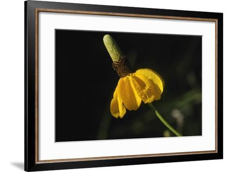 Shades of Nature 15-Gordon Semmens-Framed Art Print
