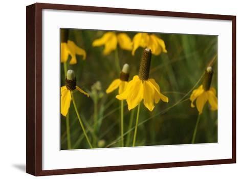 Shades of Nature 12-Gordon Semmens-Framed Art Print