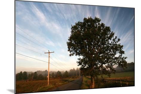 Tree Pole Road Sky-Robert Goldwitz-Mounted Photographic Print
