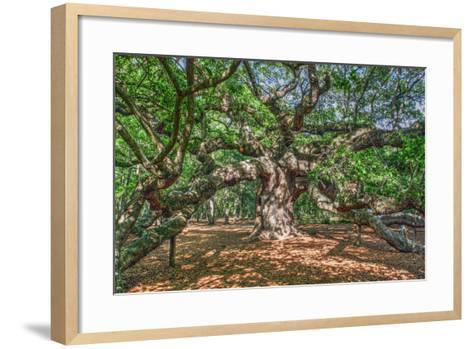 Angel Oak-Robert Goldwitz-Framed Art Print