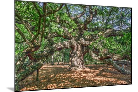 Angel Oak-Robert Goldwitz-Mounted Photographic Print