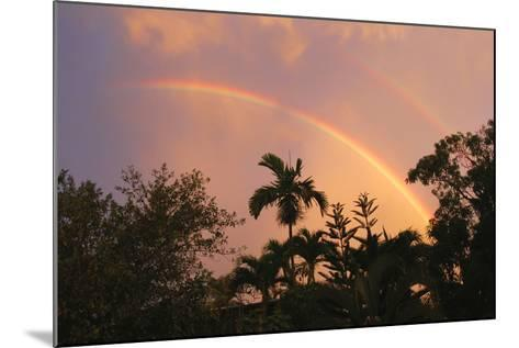 Rainbow Palms-Robert Goldwitz-Mounted Photographic Print