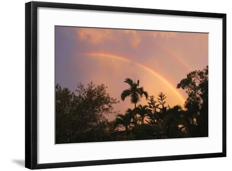 Rainbow Palms-Robert Goldwitz-Framed Art Print