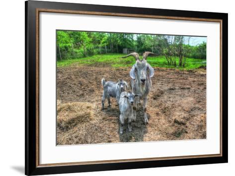 Goats-Robert Goldwitz-Framed Art Print
